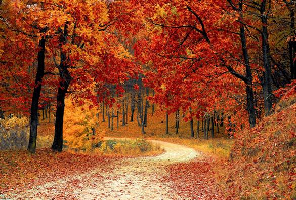 4 événements gourmands à découvrir cet automne
